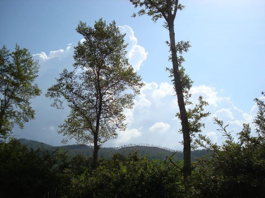 Der Weg zur Einsiedelei von Cerbaiolo, die sanft an einem Hang liegt.